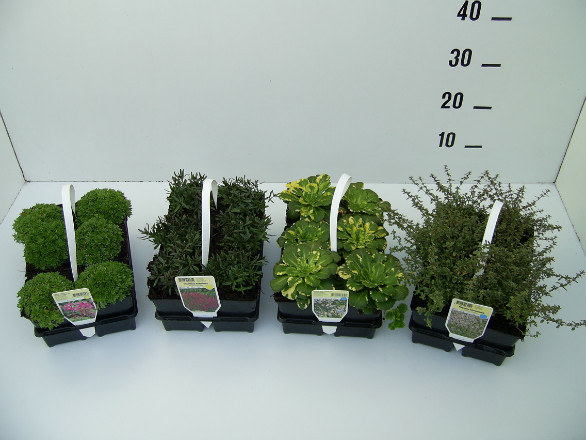 Voorbeeld van planten in 6-pack